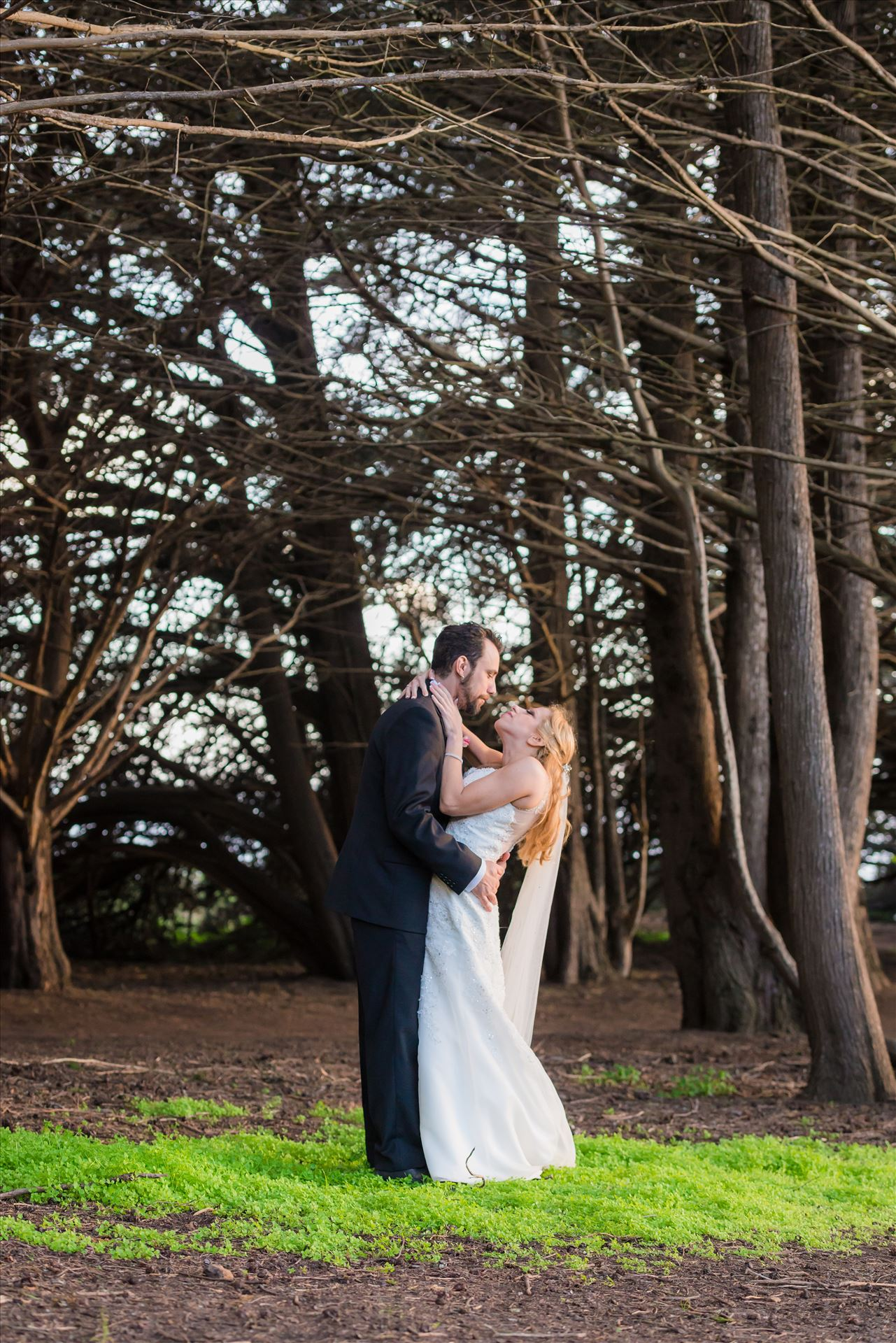 Adele and Jason 02 - Ragged Point Inn Wedding Elopement photography by Mirror's Edge Photography in San Simeon Cambria California. Bride and groom in the trees by Sarah Williams