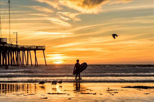 Sunset Surfing and a Flying Bird.jpg -