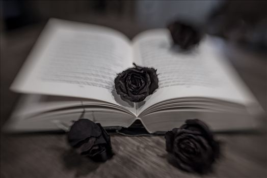Black roses in a book in modern art style with Lensbaby Sweet 35