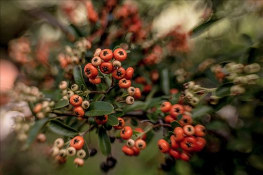 Celebrate Autumn color with spice colored berries