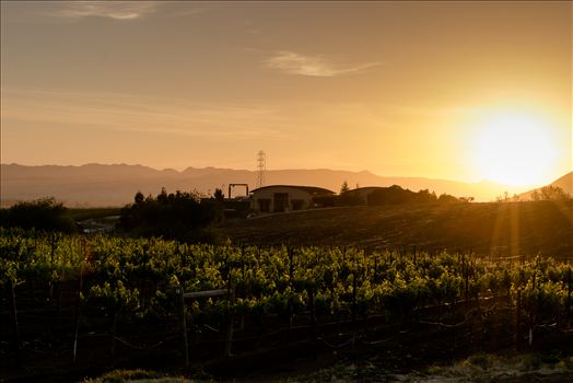 Central Coast Vineyard Sunset and Wine Makers Home