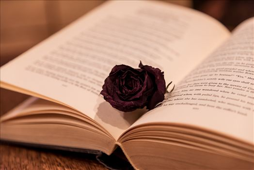 Black Rose in a Book.jpg - Dried rose in a book, brittle and beautiful